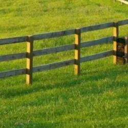 Planejamento patrimonial e sucessório do produtor rural e a constituição de holdings.